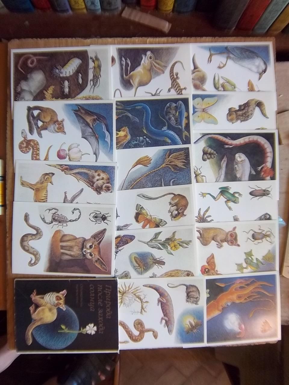 «Природа после захода солнца Обитатели темноты» Комплект открыток