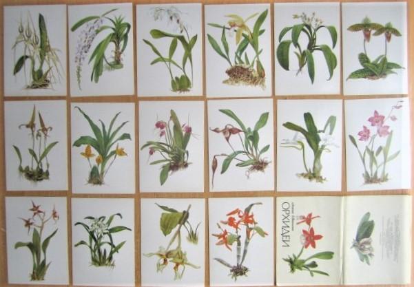 Комплект открыток «Орхидеи» Выпуск 2