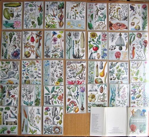 Комплект открыток «Удивительные растения»